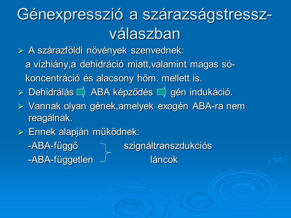 Génexpresszió a szárazságstressz-válaszban
