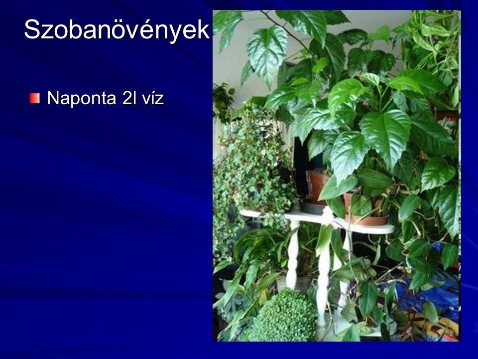 Szobanövények Naponta 2l víz