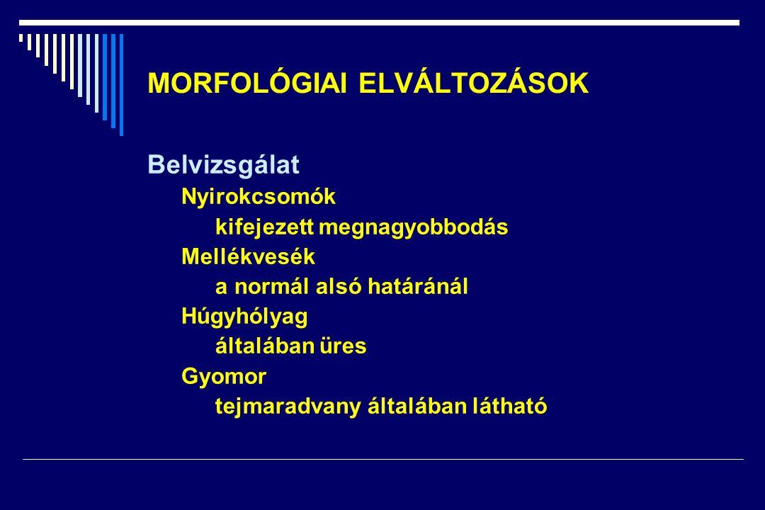 MORFOLÓGIAI ELVÁLTOZÁSOK