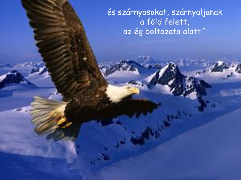 és szárnyasokat, szárnyaljanak a föld felett,