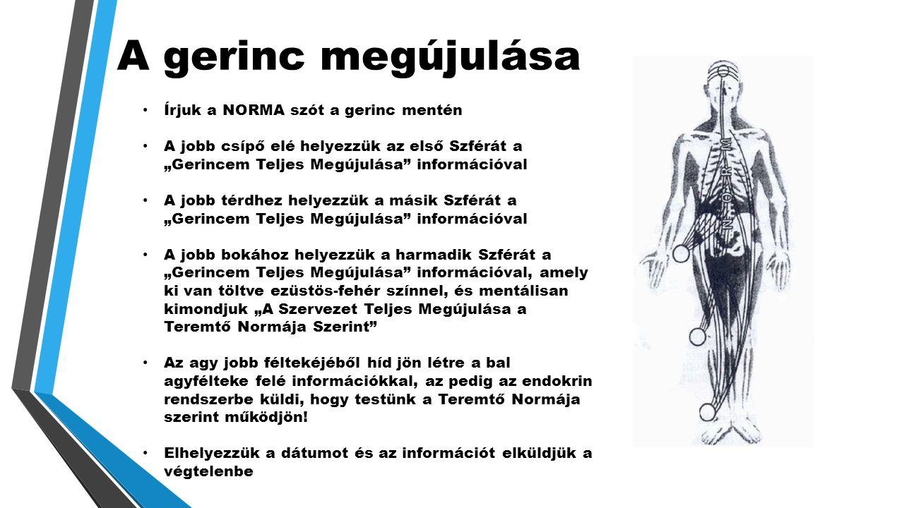 A gerinc megújulása Írjuk a NORMA szót a gerinc mentén