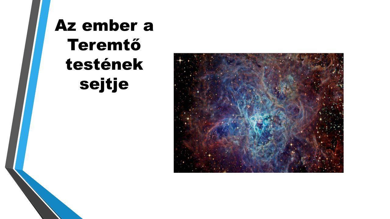 Az ember a Teremtő testének sejtje