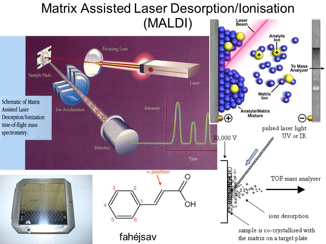 Matrix Assisted Laser Desorption/Ionisation (MALDI)