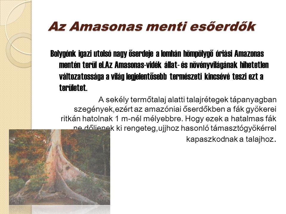 Az Amasonas menti esőerdők