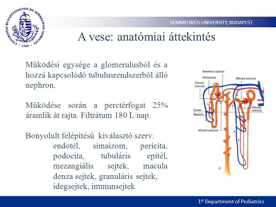 A vese: anatómiai áttekintés