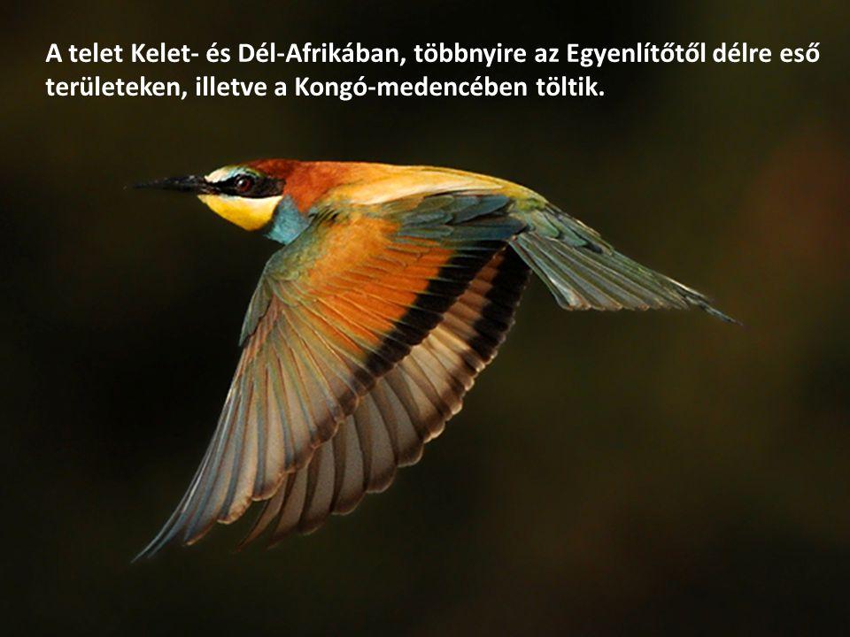 A telet Kelet- és Dél-Afrikában, többnyire az Egyenlítőtől délre eső területeken, illetve a Kongó-medencében töltik.