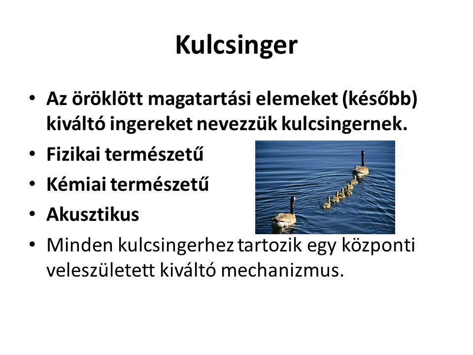 Kulcsinger Az öröklött magatartási elemeket (később) kiváltó ingereket nevezzük kulcsingernek. Fizikai természetű.