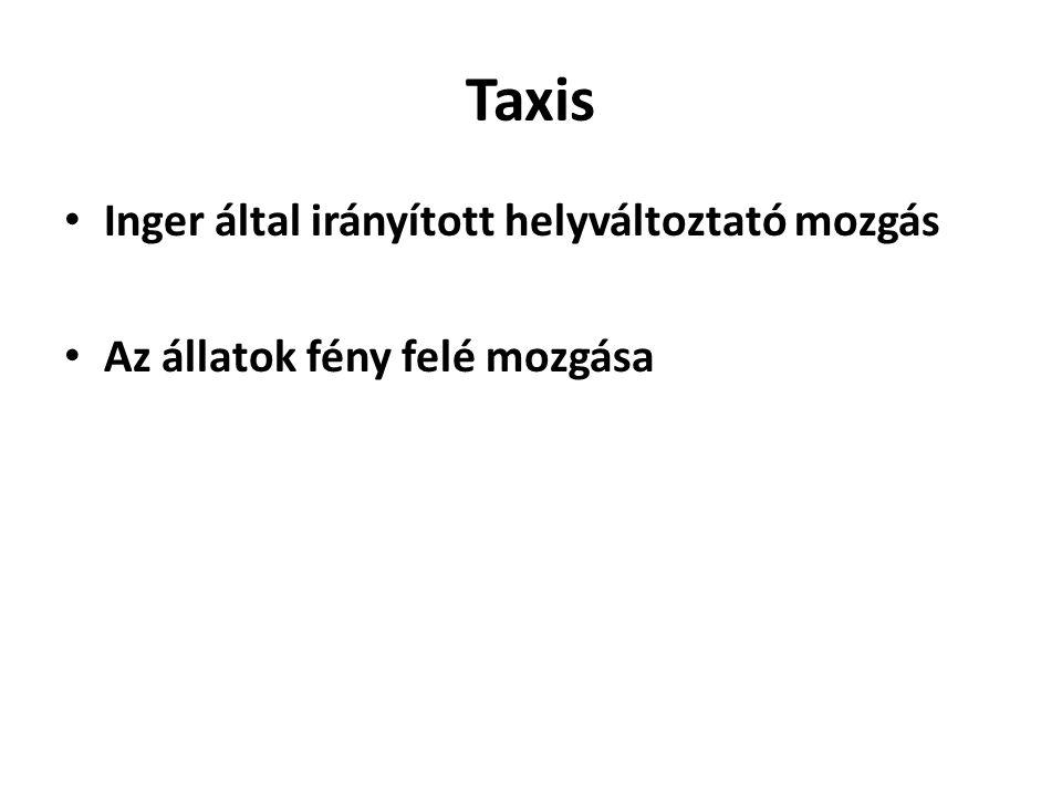 Taxis Inger által irányított helyváltoztató mozgás