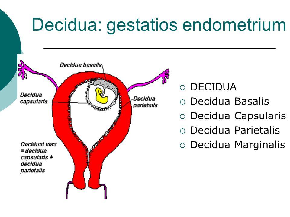 Decidua: gestatios endometrium