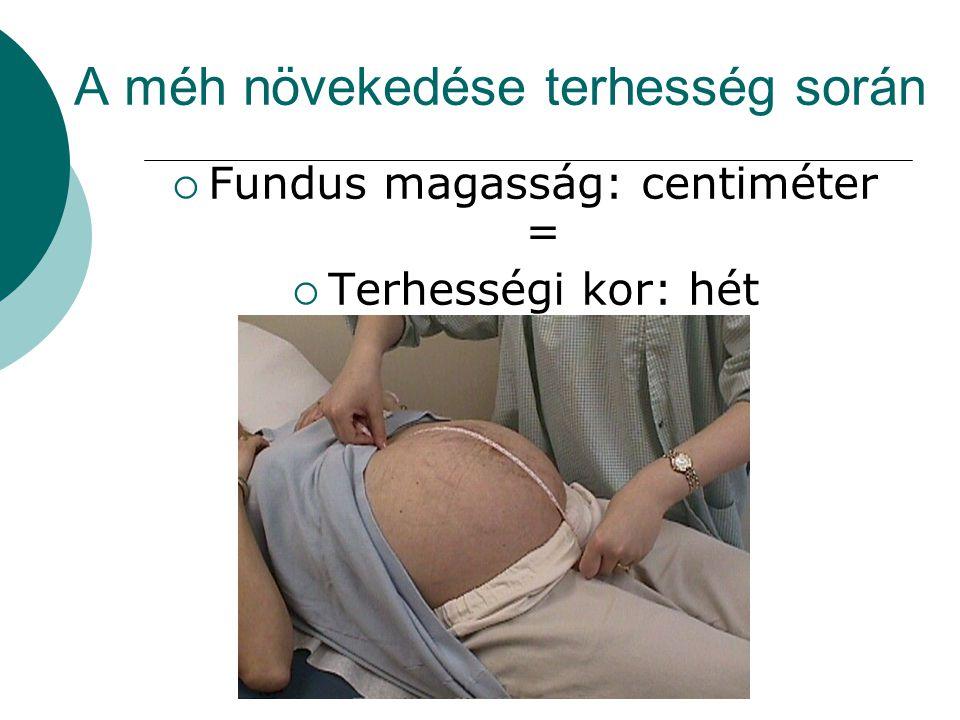 A méh növekedése terhesség során
