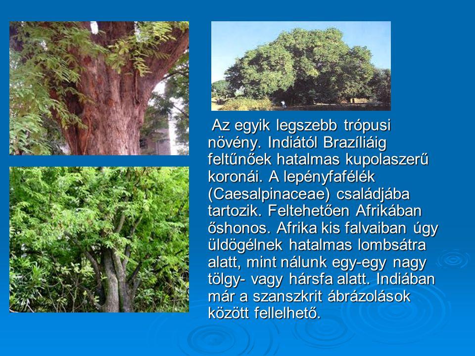 Az egyik legszebb trópusi növény
