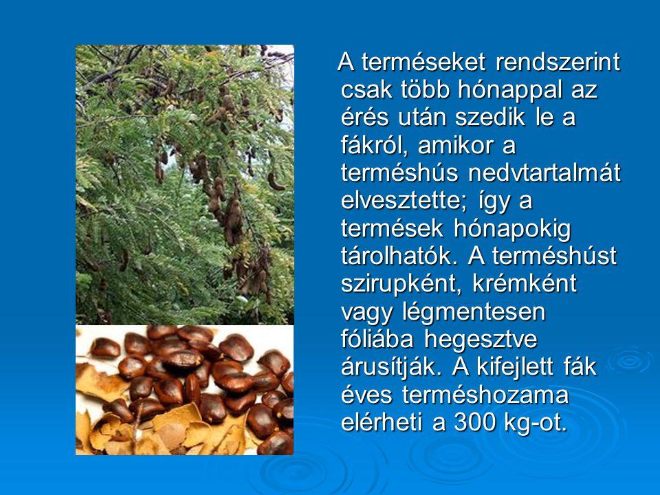 A terméseket rendszerint csak több hónappal az érés után szedik le a fákról, amikor a terméshús nedvtartalmát elvesztette; így a termések hónapokig tárolhatók.