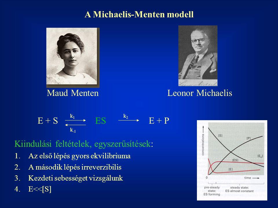 A Michaelis-Menten modell