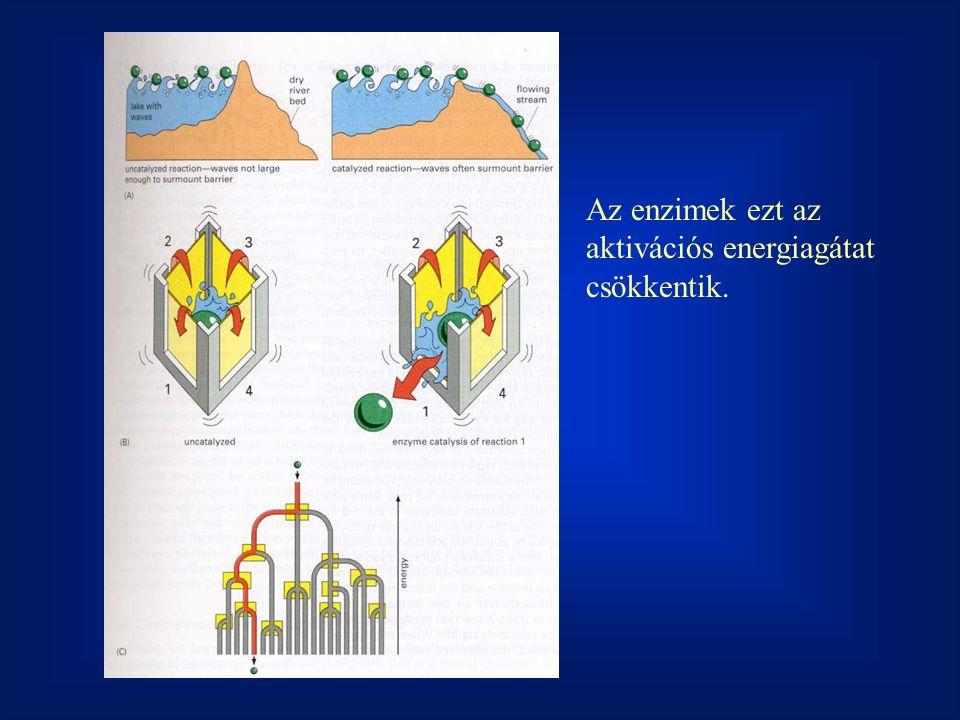 Az enzimek ezt az aktivációs energiagátat csökkentik.