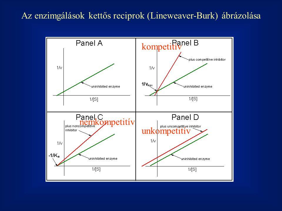 Az enzimgálások kettős reciprok (Lineweaver-Burk) ábrázolása