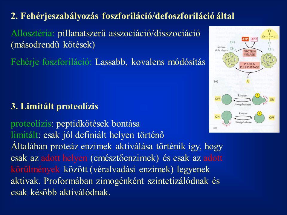2. Fehérjeszabályozás foszforiláció/defoszforiláció által