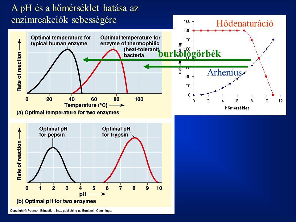 A pH és a hőmérséklet hatása az enzimreakciók sebességére