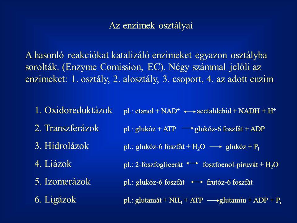 Az enzimek osztályai