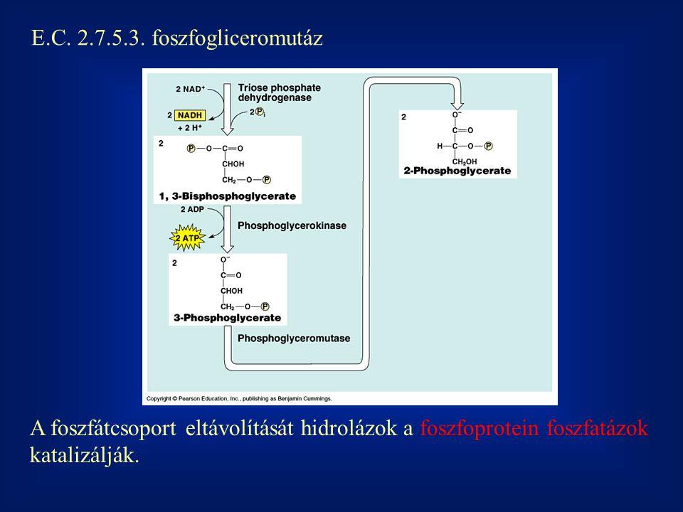 E.C. 2.7.5.3. foszfogliceromutáz