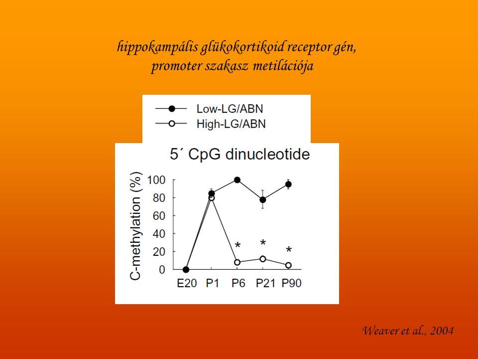 hippokampális glükokortikoid receptor gén,