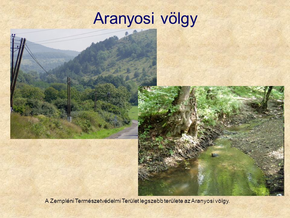 Aranyosi völgy A Zempléni Természetvédelmi Terület legszebb területe az Aranyosi völgy.