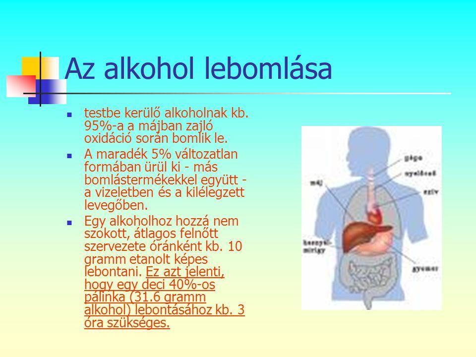 Az alkohol lebomlása testbe kerülő alkoholnak kb. 95%-a a májban zajló oxidáció során bomlik le.