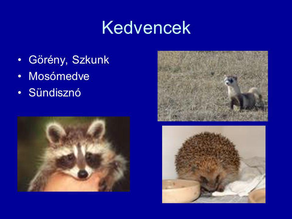 Kedvencek Görény, Szkunk Mosómedve Sündisznó