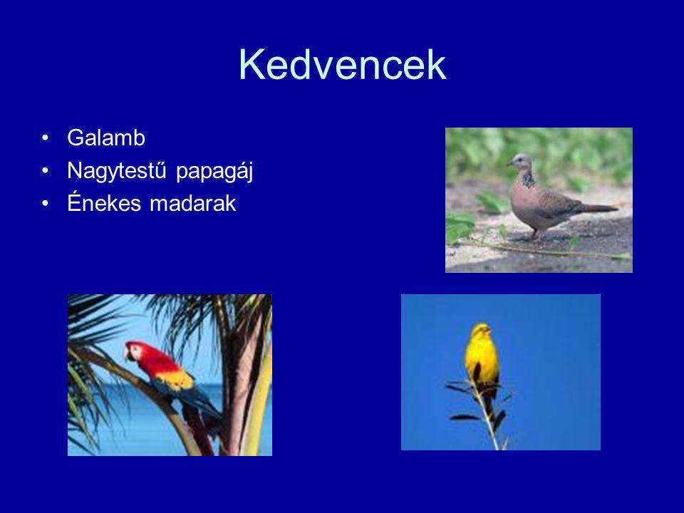 Kedvencek Galamb Nagytestű papagáj Énekes madarak