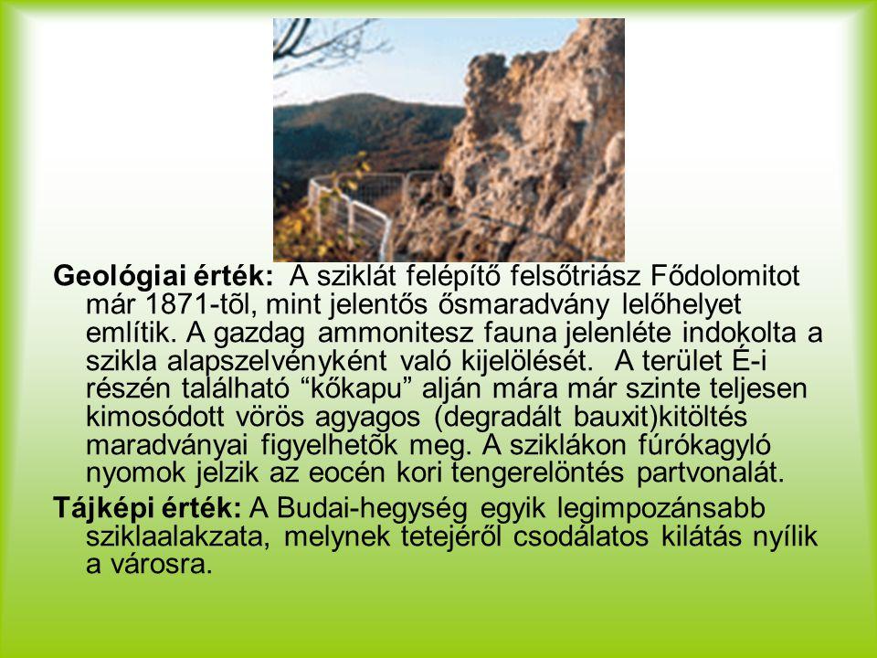 Geológiai érték: A sziklát felépítő felsőtriász Fődolomitot már 1871-tõl, mint jelentős ősmaradvány lelőhelyet említik. A gazdag ammonitesz fauna jelenléte indokolta a szikla alapszelvényként való kijelölését. A terület É-i részén található kőkapu alján mára már szinte teljesen kimosódott vörös agyagos (degradált bauxit)kitöltés maradványai figyelhetõk meg. A sziklákon fúrókagyló nyomok jelzik az eocén kori tengerelöntés partvonalát.
