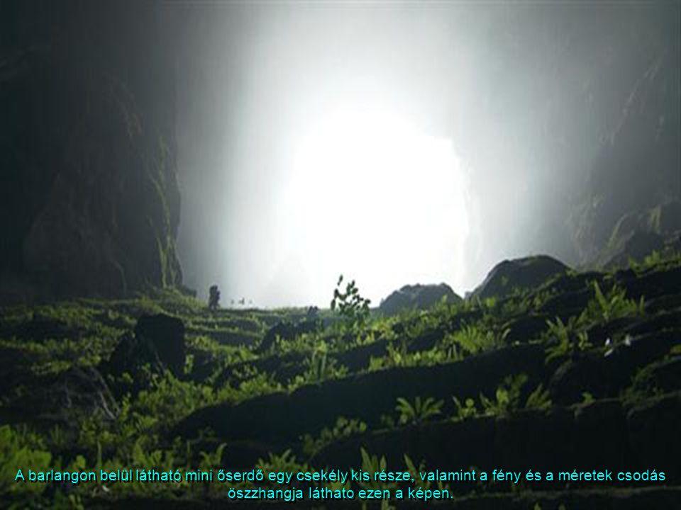 A barlangon belül látható mini őserdő egy csekély kis része, valamint a fény és a méretek csodás öszzhangja láthato ezen a képen.