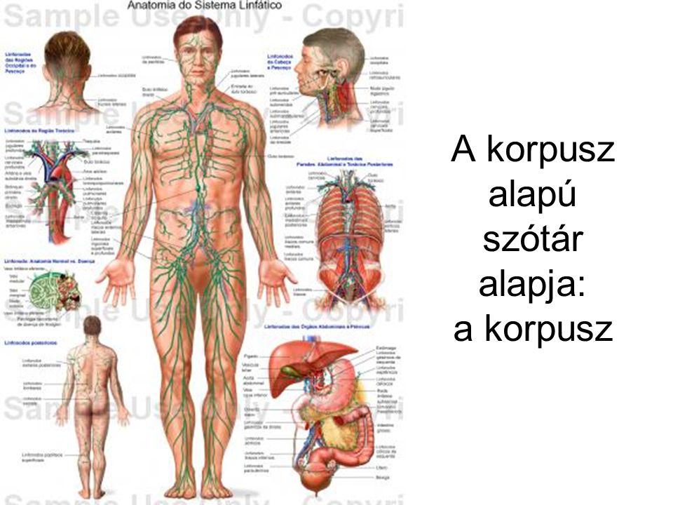A korpusz alapú szótár alapja: a korpusz