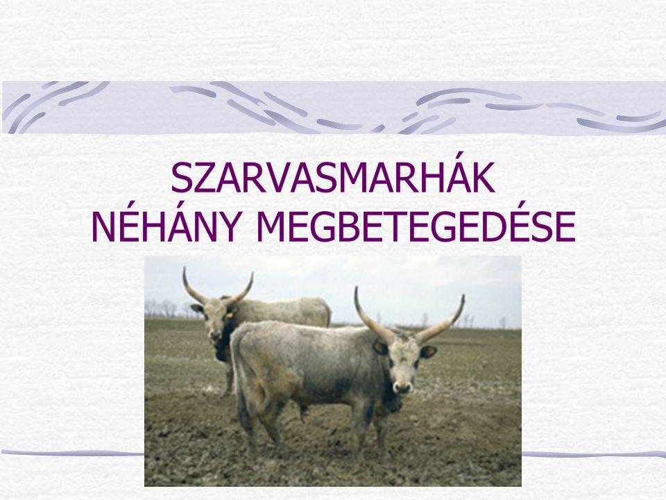 SZARVASMARHÁK NÉHÁNY MEGBETEGEDÉSE