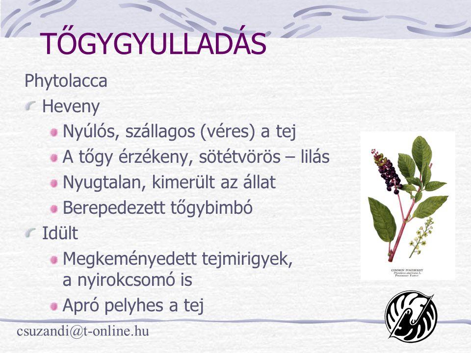 TŐGYGYULLADÁS Phytolacca Heveny Nyúlós, szállagos (véres) a tej