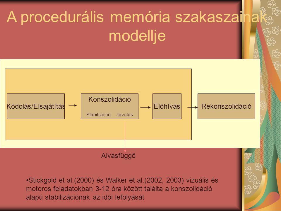 A procedurális memória szakaszainak modellje