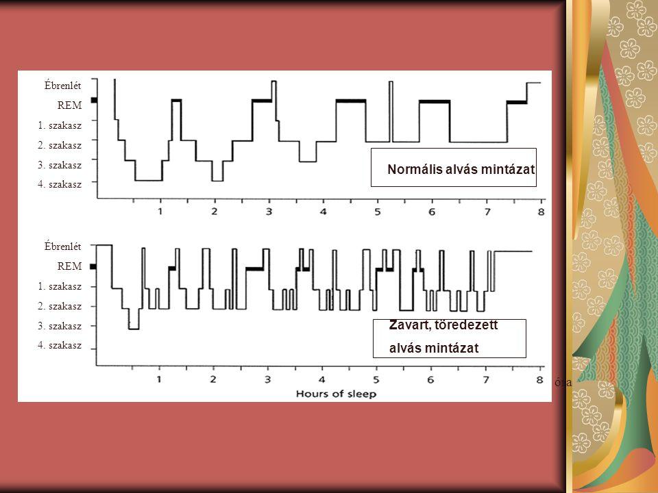 Normális alvás mintázat