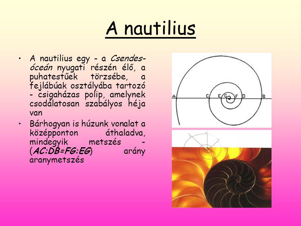 A nautilius