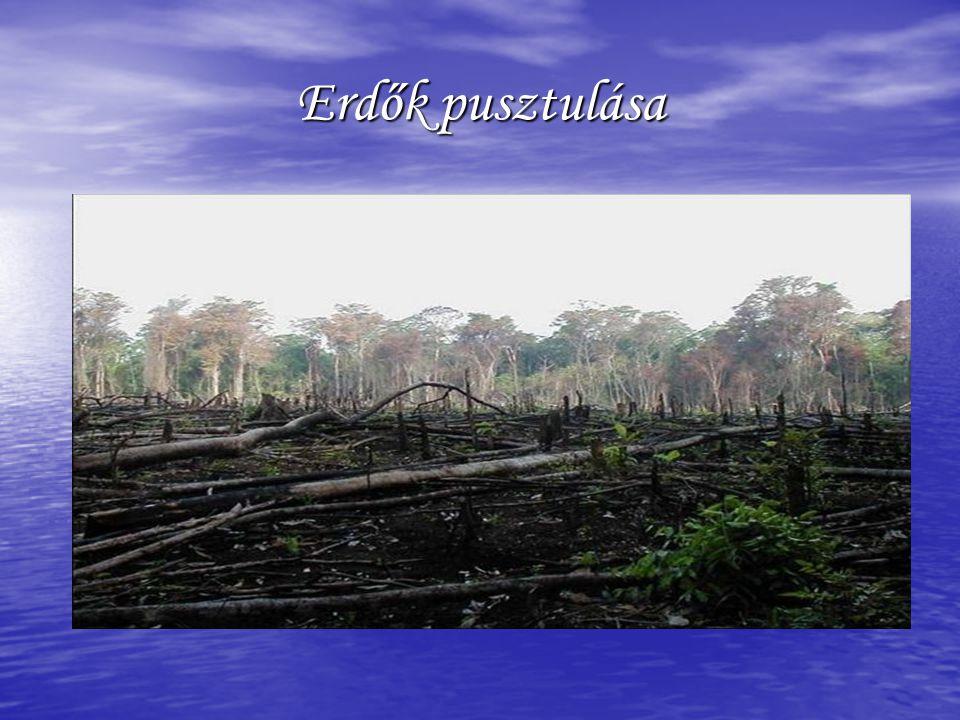 Erdők pusztulása