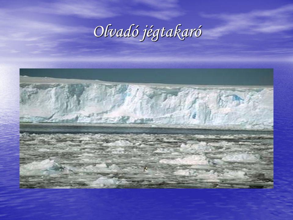 Olvadó jégtakaró