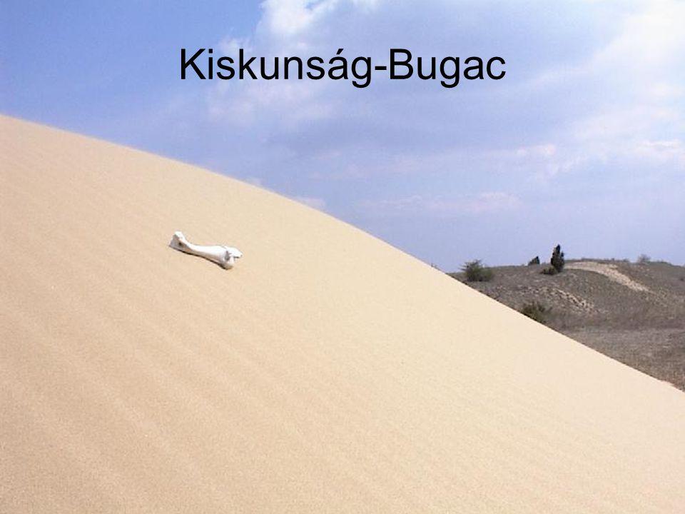 Kiskunság-Bugac