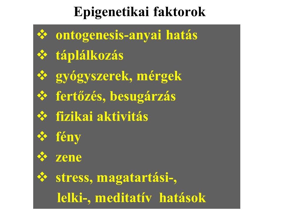 Epigenetikai faktorok