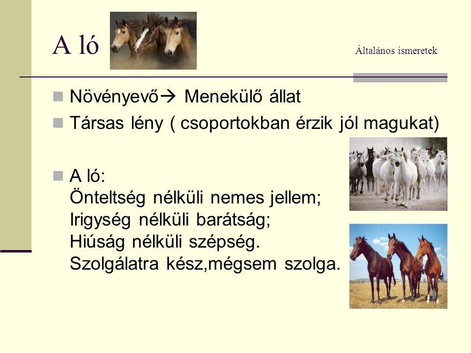 A ló Általános ismeretek