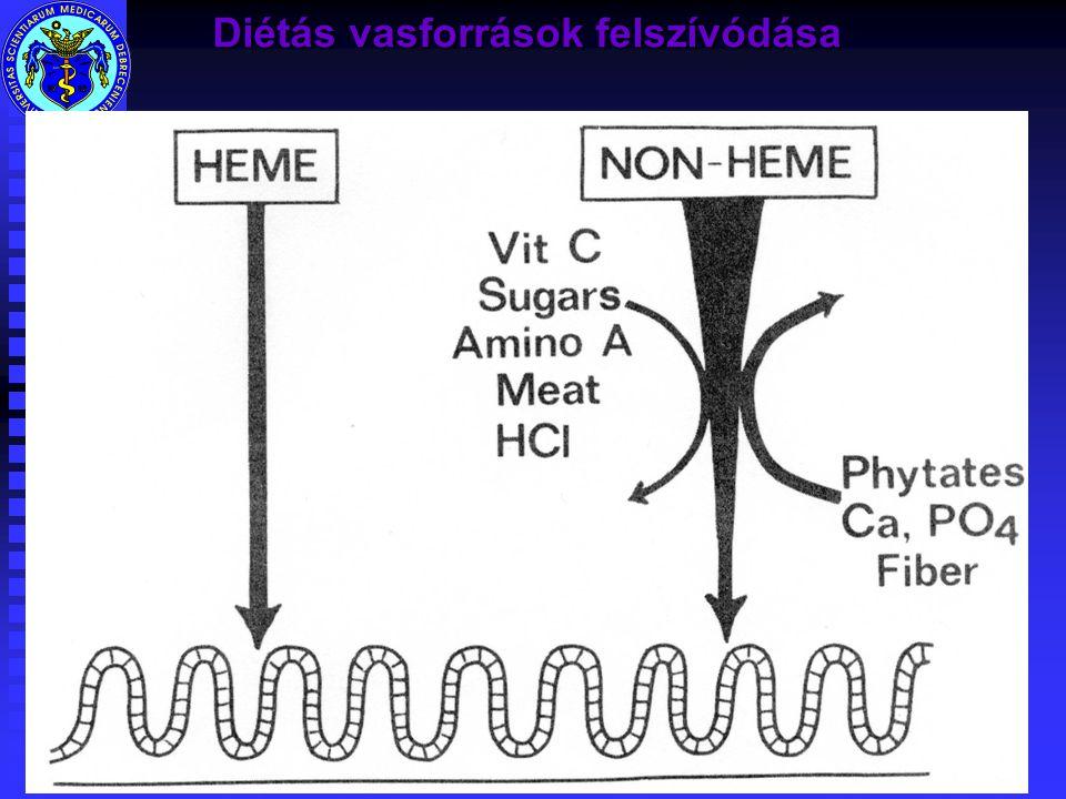 Diétás vasforrások felszívódása