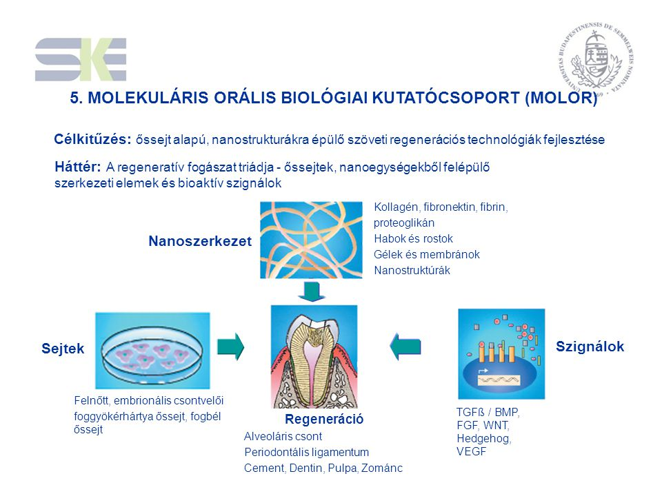 5. MOLEKULÁRIS ORÁLIS BIOLÓGIAI KUTATÓCSOPORT (MOLOR)