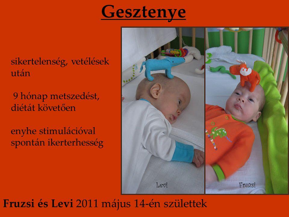 Gesztenye Fruzsi és Levi 2011 május 14-én születtek