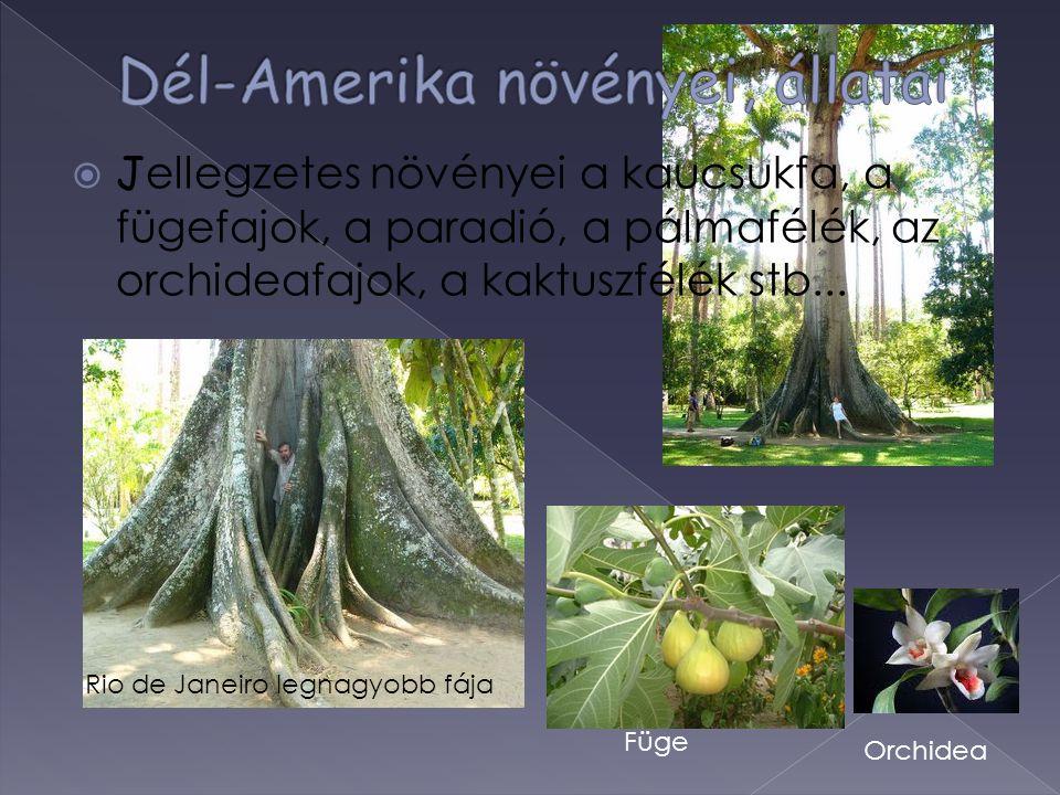 Dél-Amerika növényei, állatai