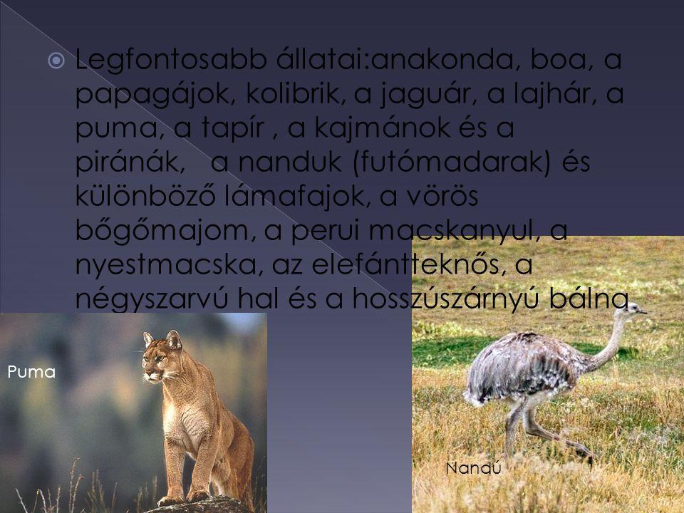 Legfontosabb állatai:anakonda, boa, a papagájok, kolibrik, a jaguár, a lajhár, a puma, a tapír , a kajmánok és a piránák, a nanduk (futómadarak) és különböző lámafajok, a vörös bőgőmajom, a perui macskanyul, a nyestmacska, az elefántteknős, a négyszarvú hal és a hosszúszárnyú bálna