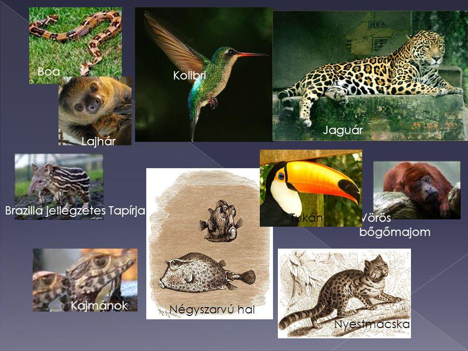 Boa Kolibri. Jaguár. Lajhár. Brazilia jellegzetes Tapírja. Tukán. Vörös bőgőmajom. Kajmánok. Négyszarvú hal.