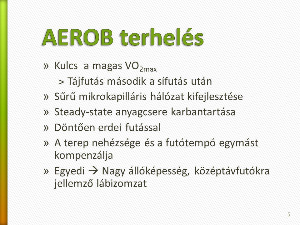 AEROB terhelés Kulcs a magas VO2max Tájfutás második a sífutás után