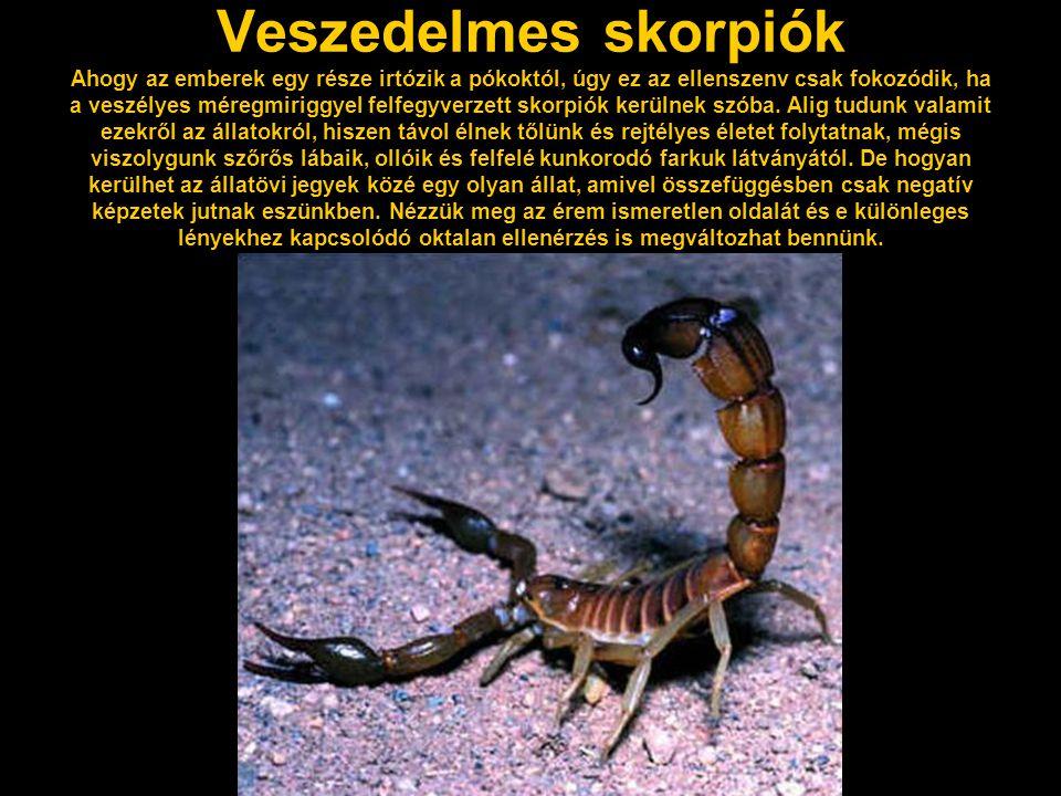 Veszedelmes skorpiók Ahogy az emberek egy része irtózik a pókoktól, úgy ez az ellenszenv csak fokozódik, ha a veszélyes méregmiriggyel felfegyverzett skorpiók kerülnek szóba.