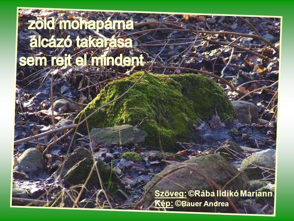 zöld mohapárna álcázó takarása sem rejt el mindent